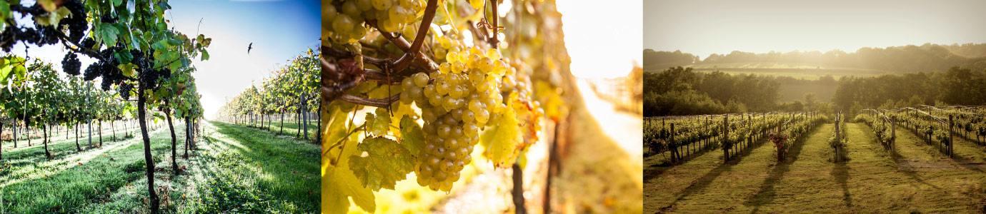 Bluebell Vineyards